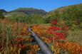 草津白根山での紅葉