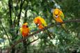 オーストラリアの鳥 その4