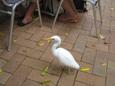 グリーン島の鳥 その1
