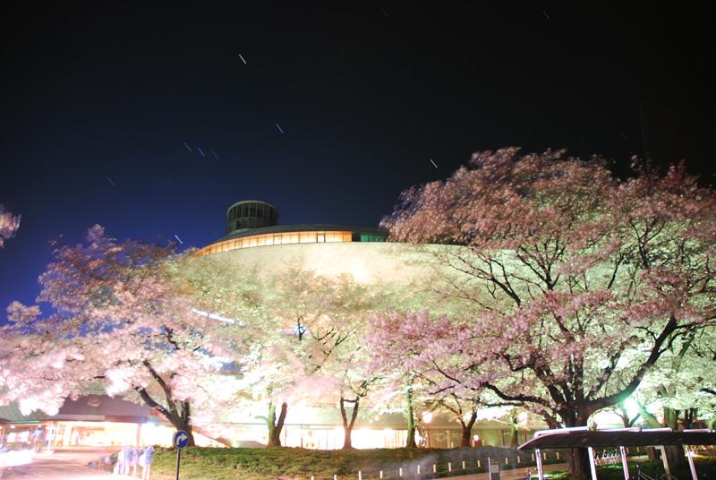 市役所の桜とオリオン座