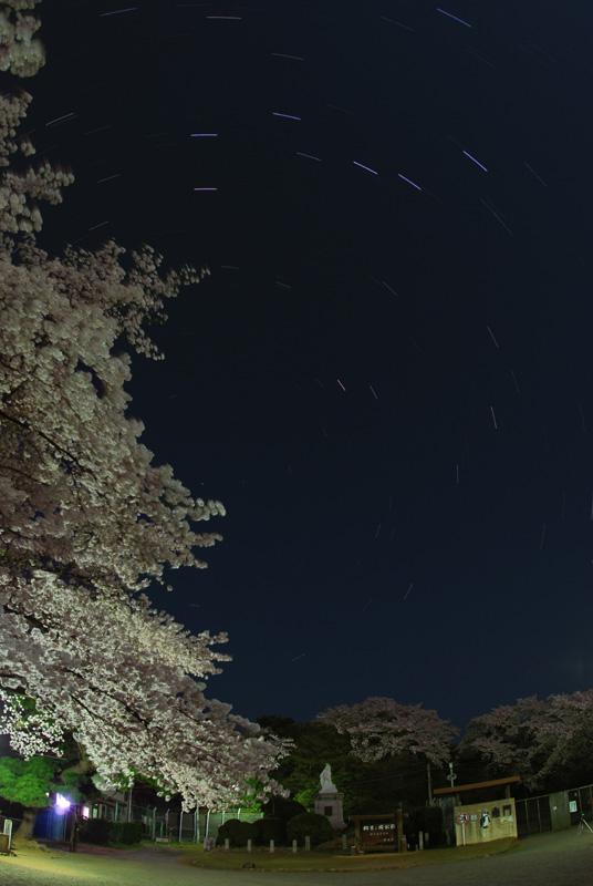 公園の桜と大小ひしゃく